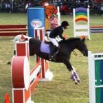 bermuda horse ag 20