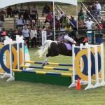 bermuda horse ag 23
