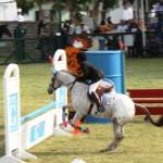 bermuda horse ag 26