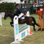 bermuda horse ag 3