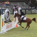 bermuda horse ag 31