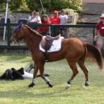 bermuda horse ag 33