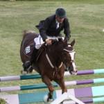 bermuda horse ag 9