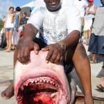 tiger shark july 2010 (10)