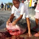 tiger shark july 2010 (17)