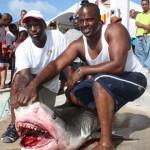 tiger shark july 2010 (5)