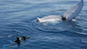 whale film