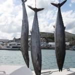 wahoo fish tourn 2010 (4)