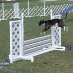 bermuda dog show oct 23 (11)
