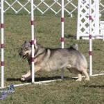 bermuda dog show oct 23 (15)