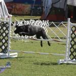 bermuda dog show oct 23