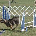bermuda dog show oct 23 (18)
