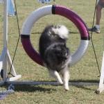 bermuda dog show oct 23 (20)