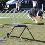 bermuda dog show oct 23 (23)
