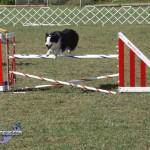 bermuda dog show oct 23 (24)