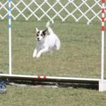 bermuda dog show oct 23 (7)