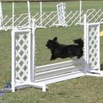 bermuda dog show oct 23 (9)