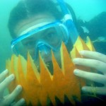 underwater pumpkin carving bios 2010 (3)
