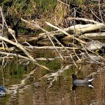 Wetlands Bermuda Feb 1st 2011-1-10