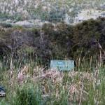 Wetlands Bermuda Feb 1st 2011-1-21