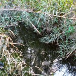 Wetlands Bermuda Feb 1st 2011-1-22
