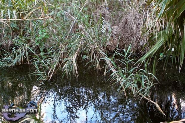 Wetlands Bermuda Feb 1st 2011-1-23