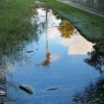 Wetlands Bermuda Feb 1st 2011-1-25