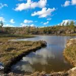 Wetlands Bermuda Feb 1st 2011-1-5