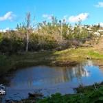Wetlands Bermuda Feb 1st 2011-1-7
