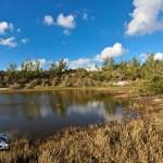 Wetlands Bermuda Feb 1st 2011-1