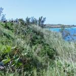 Tuckers Point Rosewood Walk - Bermuda Mar 6th 2011-1-7