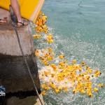 BELCO Rubber Duck Derby Bermuda June 5 2011-1-26