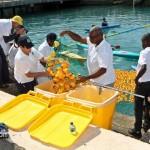BELCO Rubber Duck Derby Bermuda June 5 2011-1-37