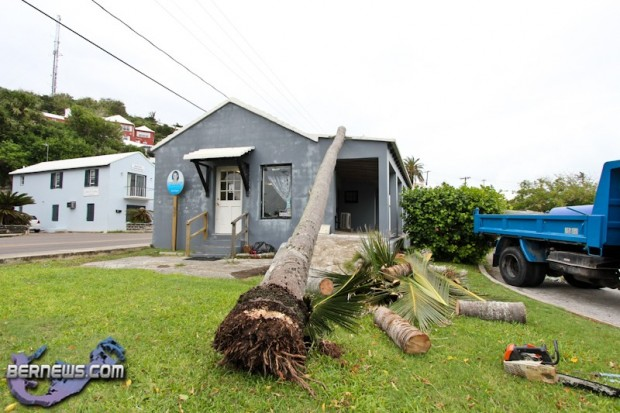 Tiger Bay tree Tropical Storm Maria hurricane weather Bermuda September 15 2011-1