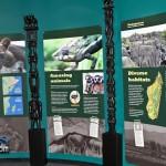 Madagascar Exhibit BAMZ Bermuda November 10 2011-1-12