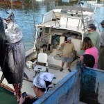 920lb tuna feb 1 2012 (1)