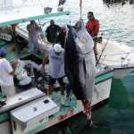 920lb tuna feb 1 2012 (8)