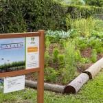Sunshine League's Catlin Community Garden Opened Bermuda June 7 2012-001