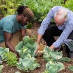 Sunshine League's Catlin Community Garden Opened Bermuda June 7 2012-012
