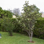 Sunshine League's Catlin Community Garden Opened Bermuda June 7 2012-019