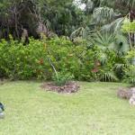 Sunshine League's Catlin Community Garden Opened Bermuda June 7 2012-022