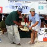 Fripper Turtle Release Clearwater Beach Bermuda August 14 2012 (17)
