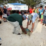 Fripper Turtle Release Clearwater Beach Bermuda August 14 2012 (18)