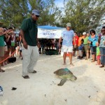 Fripper Turtle Release Clearwater Beach Bermuda August 14 2012 (19)