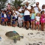 Fripper Turtle Release Clearwater Beach Bermuda August 14 2012 (2)