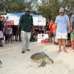 Fripper Turtle Release Clearwater Beach Bermuda August 14 2012 (20)