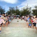 Fripper Turtle Release Clearwater Beach Bermuda August 14 2012 (24)