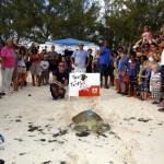 Fripper Turtle Release Clearwater Beach Bermuda August 14 2012 (4)