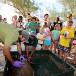 Fripper Turtle Release Clearwater Beach Bermuda August 14 2012 (9)