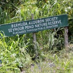 Seymour Pond Nature Reserve, Bermuda August 6 2012 (11)